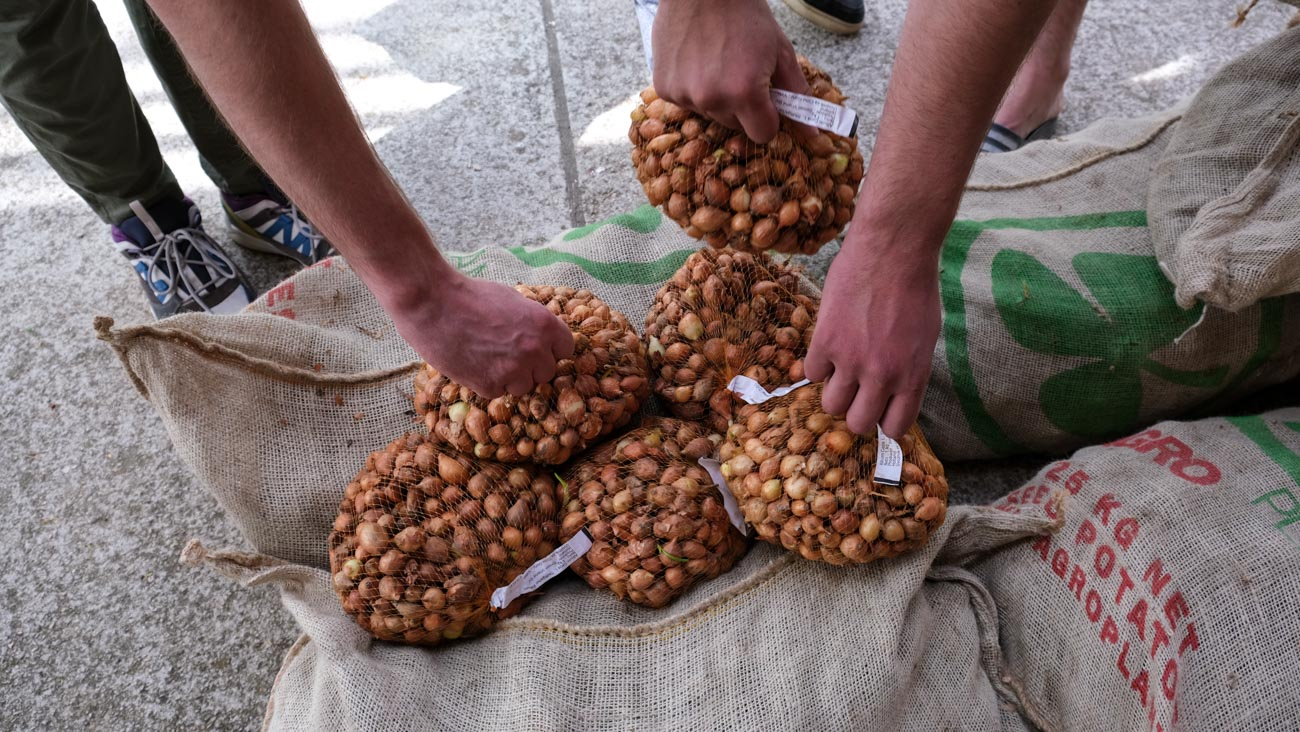 Montenegro Seed Project 2020 seed distribution